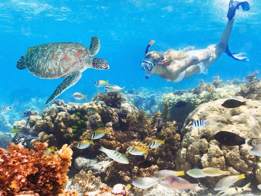 cabarete-snorkelling